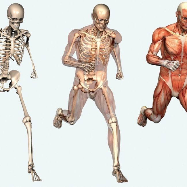 skeleton-picture-of-human-body-muscles-skeleton-1829596093